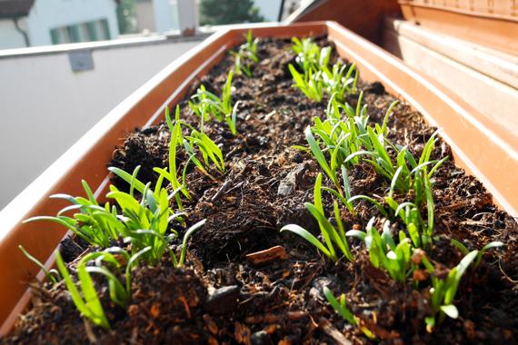 Create Share Love | Garden in September 3