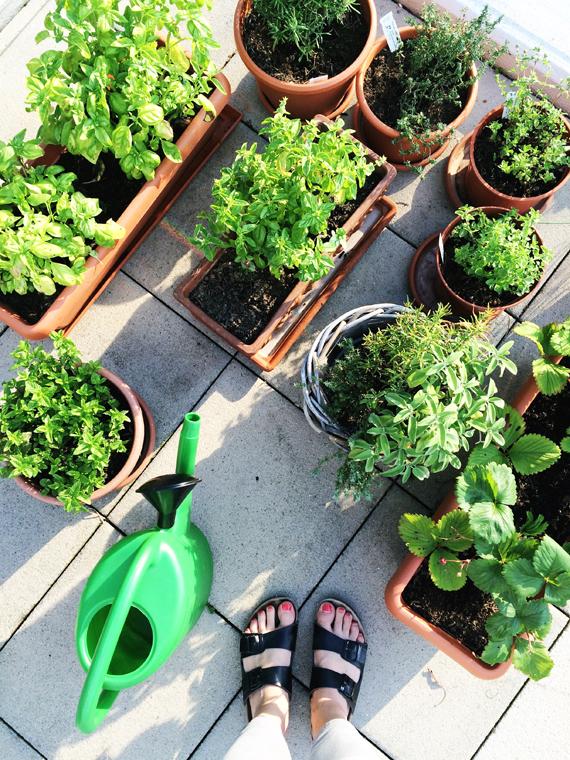 Create Share Love | Herbs 2016